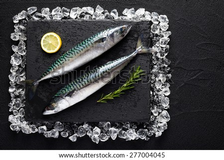 Fresh mackerel fish on ice on a black stone table top view - stock photo