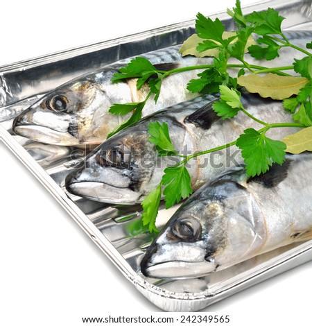 Fresh mackerel fish with parsley on the aluminium foil tray isolated on white - stock photo