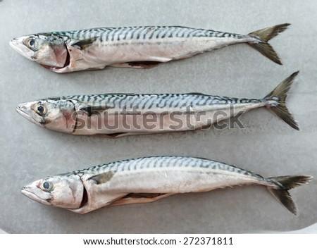 Fresh mackerel fishes  - stock photo