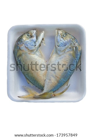Fresh mackerel isolated on white background - stock photo