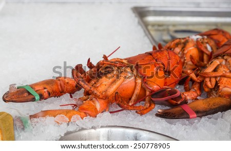 Fresh Maine lobster on ice in a market - stock photo
