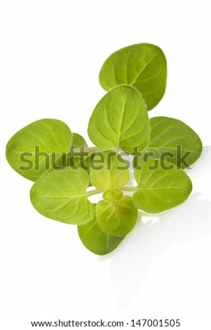 Fresh marjoram leaves isolated on white background with reflection. Culinary aromatic healthy herbs. - stock photo