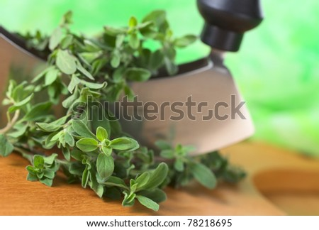 Fresh marjoram twigs with mezzaluna on cutting board with green background (Selective Focus, Focus on some of the leaves in the front) - stock photo