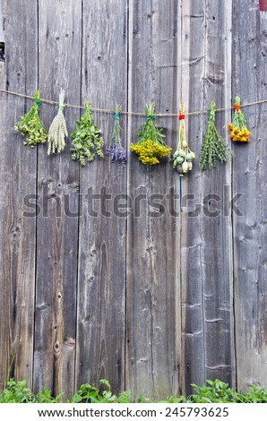 fresh medical herbs flowers bunch collection on old wooden farm barn wall  - stock photo