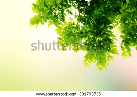 Fresh mild early growth green leaves and branches with abstract rainbow on sunrise blurred background