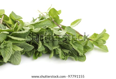 Fresh mint close-up isolated on white