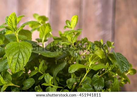 fresh mint drops of dew - stock photo