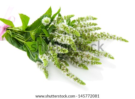 Fresh mint flowers isolated on white
