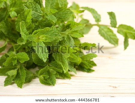 fresh mint herb on a wooden background
