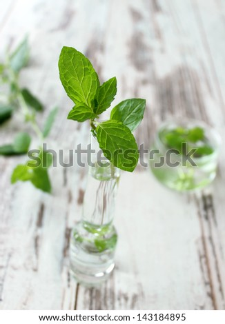 fresh mint in a glass on wooden boards - stock photo