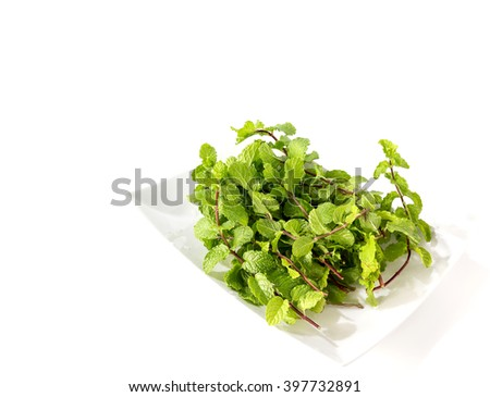 Fresh mint in the white plate-isolated on the white background. - stock photo