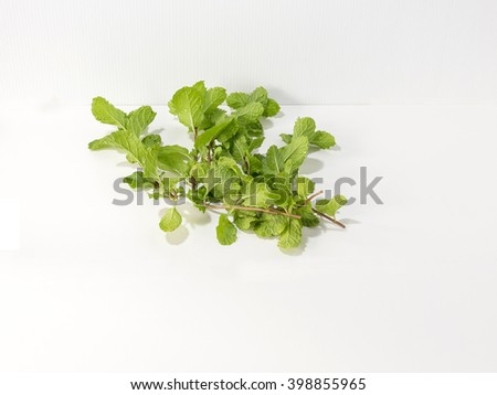Fresh mint isolated on the white background - stock photo
