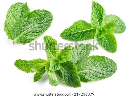 Fresh mint isolated on white. Collection - stock photo
