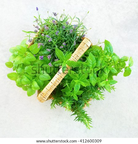 Fresh mint, lavender and rosemary growing in a basket.