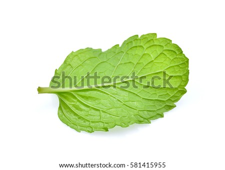 fresh mint leaf isolated on white background