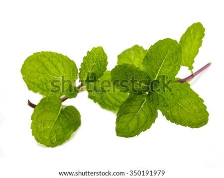 Fresh mint leaf of isolated - stock photo