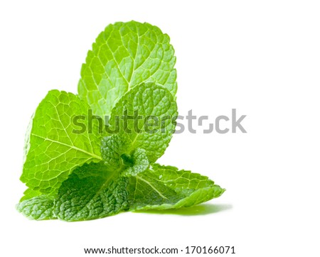 Fresh mint leafs isolated on a white background - stock photo