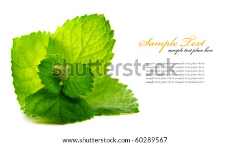 Fresh mint leaves - stock photo