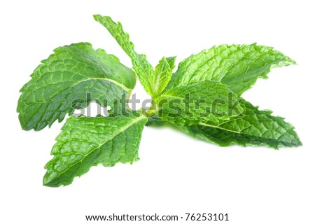 fresh mint leaves isolated on a white background - stock photo