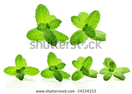 Fresh mint leaves isolated on white. - stock photo