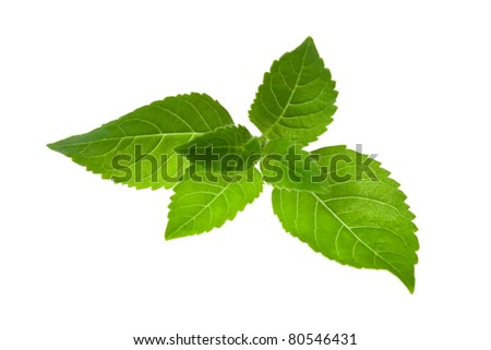Fresh mint leaves, isolated on white. - stock photo