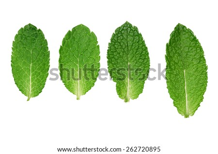 Fresh mint leaves isolated on white background. Clipping path - stock photo