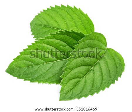 fresh mint leaves isolated on white background. Studio macro - stock photo