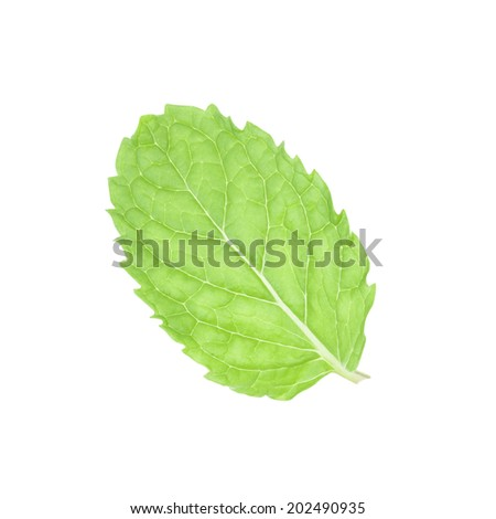 Fresh mint leaves isolated on white background with clipping path.