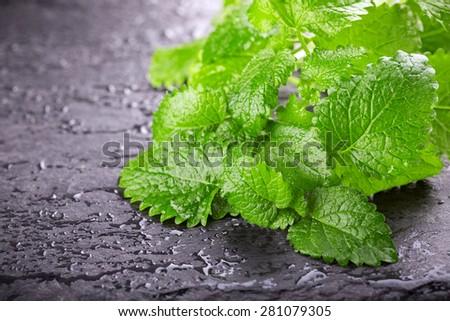 Fresh mint leaves on black background. Lemon balm. Melissa officinalis. - stock photo