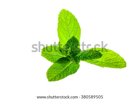 Fresh mint leaves on white background with clipping path