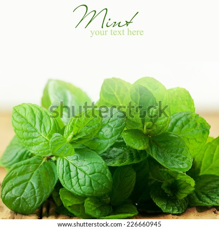 Fresh mint on  wooden background. - stock photo
