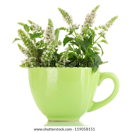 fresh mint with flowers in cup, isolated on white - stock photo