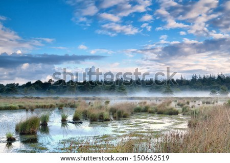 fresh mist over swamp in the morning, Fochteloerveen, Netherlands - stock photo