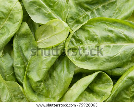 Fresh moist spinach background
