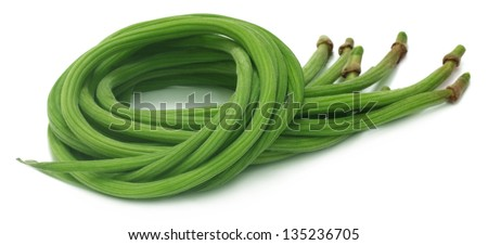 Fresh Moringa Oleifera - stock photo
