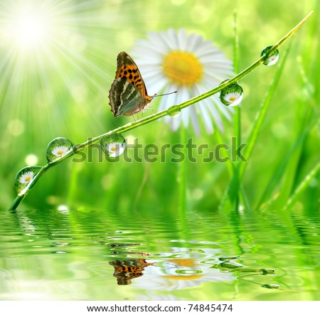 fresh morning dew and butterfly - stock photo