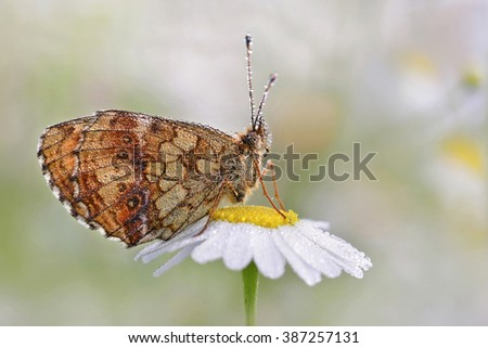 fresh morning dew and butterfly - perfect macro - stock photo