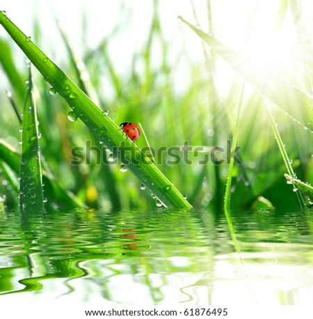 fresh morning dew and ladybird - stock photo