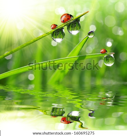 fresh morning dew and ladybirds  - stock photo