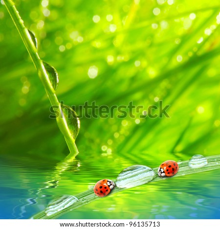Fresh morning dew on a spring grass and little ladybugs, natural background - close up with shallow DOF. - stock photo