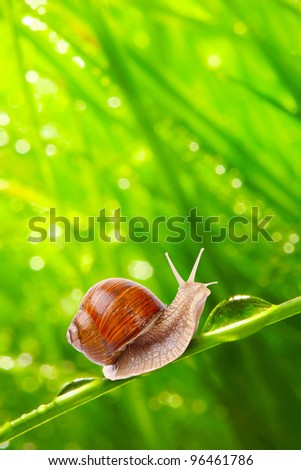 Fresh morning dew on a spring grass and little snail, natural background - close up with shallow DOF. - stock photo