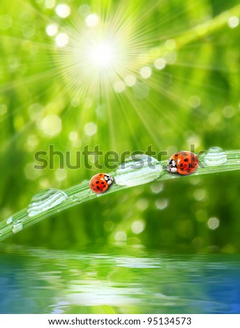 Fresh morning dew on a spring grass and two little ladybug drinking from drops, natural background. Sunny day concept. - stock photo