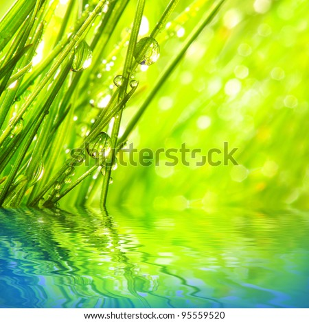 Fresh morning dew on a spring grass in early morning. Purity concept. - stock photo