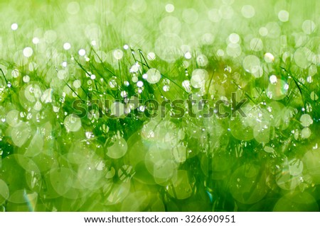 Fresh morning dew on grass. - stock photo
