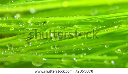 Fresh morning dew on spring grass - close up with shallow DOF. - stock photo