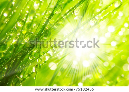 Fresh morning dew on spring grass in sunrise, natural background. - stock photo