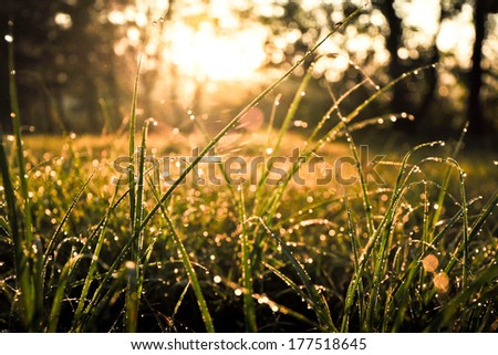 Fresh morning dew on spring grass, natural background - close up - stock photo