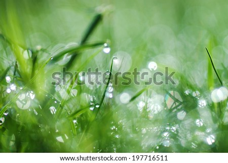 Fresh morning dew on spring grass, natural green light background