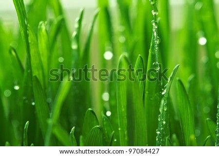 Fresh morning dew on spring green grass - stock photo