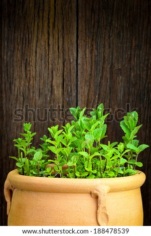 Fresh Moroccan mint herb on a natural ceramic pot rough wooden background - stock photo